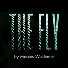 The Fly by Marcos Waldemar